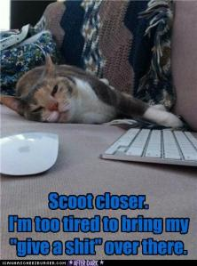 funny-pictures-scoot-closer-cat