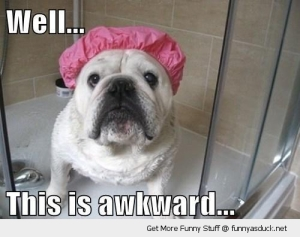 funny-awkward-dog-shower-cap-bulldog-pics