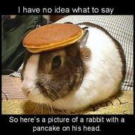 rabbit-pancake